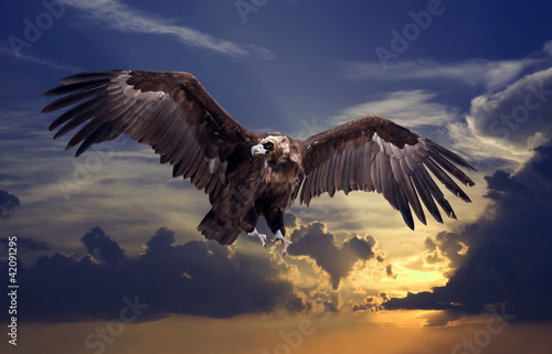 In de dag Eagle Flying black vulture