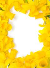Narcissus Frame