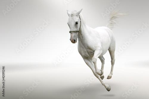Obraz na płótnie White horse