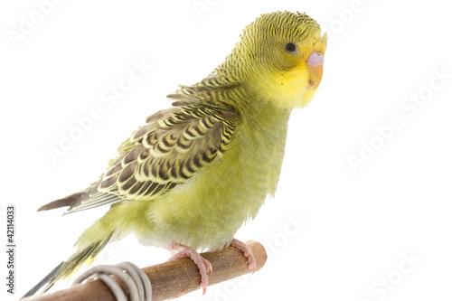 Canvas Print bird