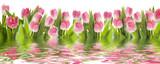 Fototapeta Tulipany - Tulpen