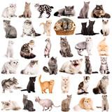 Ilustracje z kotami