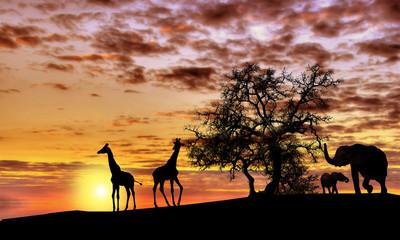 Fototapeta African sunset