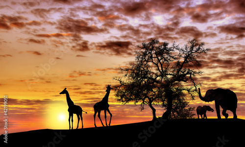 Door stickers Africa African sunset