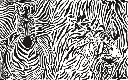zebra-i-tygrys-i-deseniowy-tlo