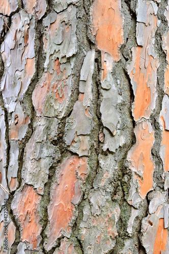 Fototapeta drzewa   kora-sosny