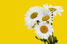 Flower Bouquet Of Daisies