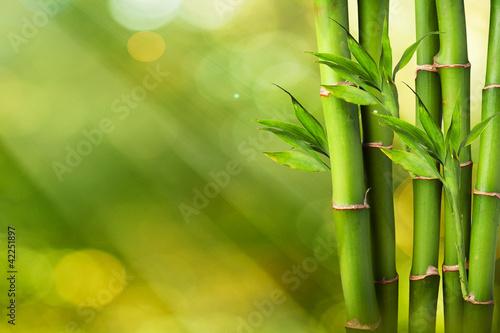 Fresh Bamboo on Summer background