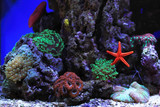 Fototapeta Fototapety do akwarium - Salt water aquarium