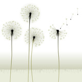 floral background, dandelion