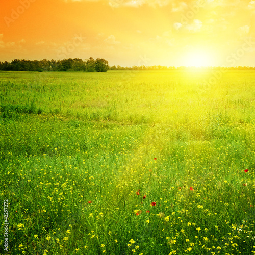 Tuinposter Geel Beautiful sunset
