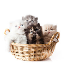 Kittens Cat Isolated Sitting I...