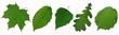 Leinwandbild Motiv Verschiedene Blätter
