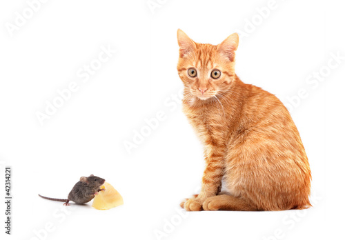Deurstickers Babykamer Mouse and cat