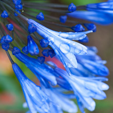 Wet Bloomers