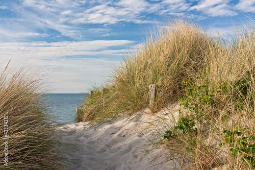Foto  Weg zum Strand durch Dünen mit Strandhafer an der Ostsee