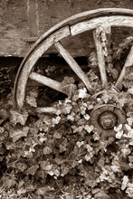 Ivy Covered Wagon Wheel