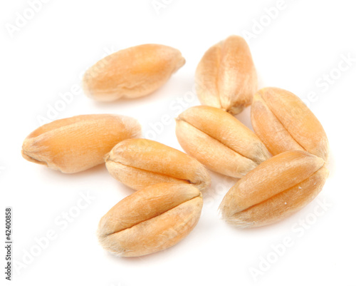 Whole Wheat Grains Macro Isolated on White Background