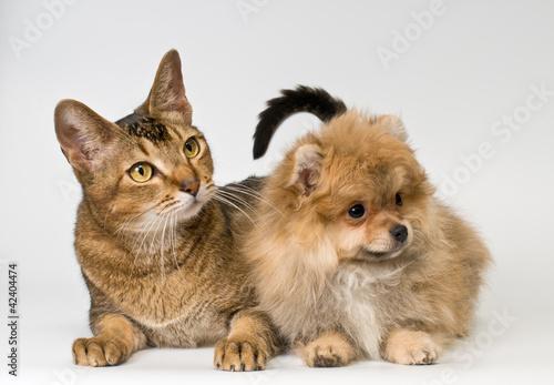 Cat and puppy  in studio © Ulf