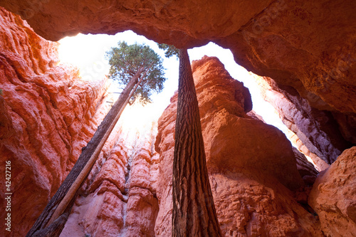 Photo sur Toile Canyon Bryce