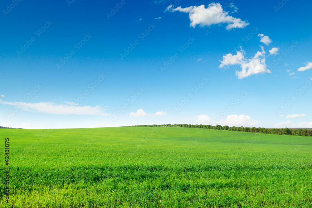 Fototapety, obrazy: picturesque green field