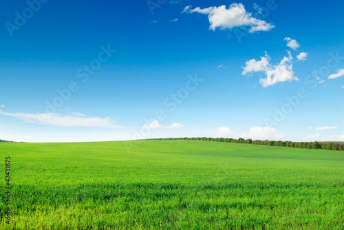 picturesque green field