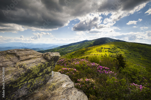 Aluminium Prints Black Appalachian Landscape Roan Mountain Flowers NC Spring Blooms