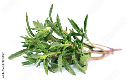 Fotografie, Obraz  Thyme  fresh herb