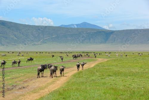 Crater Ngorongoro, Tanzania Fototapete