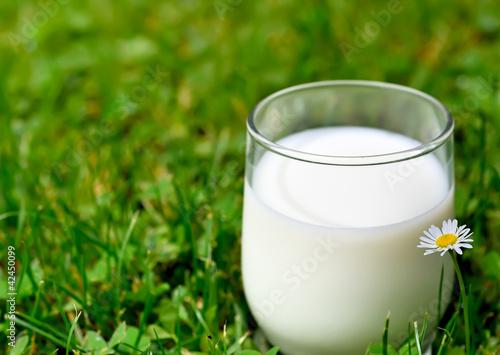 Fotografie, Obraz  un petit verre de lait dans l'herbe verte !