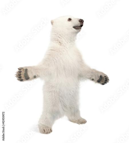 Tuinposter Ijsbeer Polar bear cub, Ursus maritimus, 6 months old