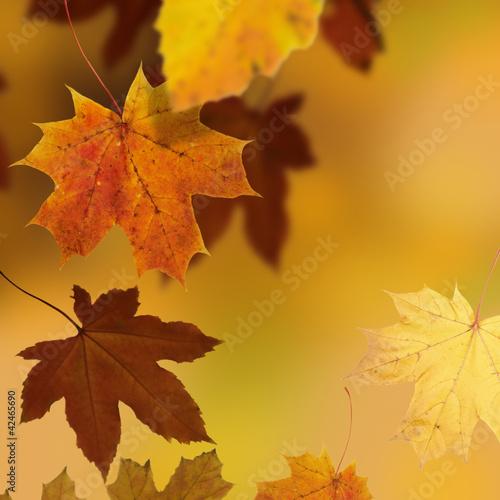 Kolekcje specjalne naklejek jesien