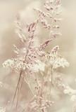 Summer Meadow - 42509879