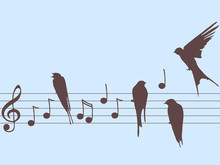 Vector Music Notes And Birds