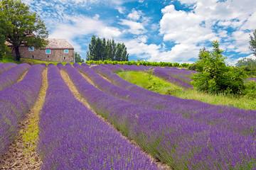 Panel Szklany Lawenda Provence