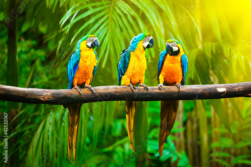 Foto op Canvas Vogel Blue-and-Yellow Macaw