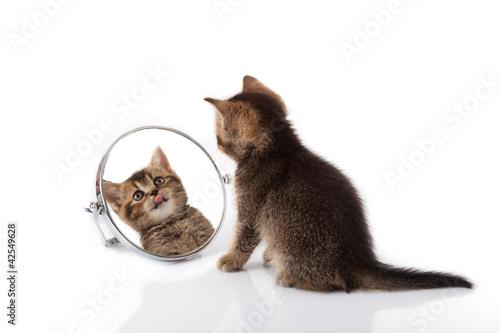 Spoed Foto op Canvas Tijger kitten with mirror on white background. kitten looks in a mirror
