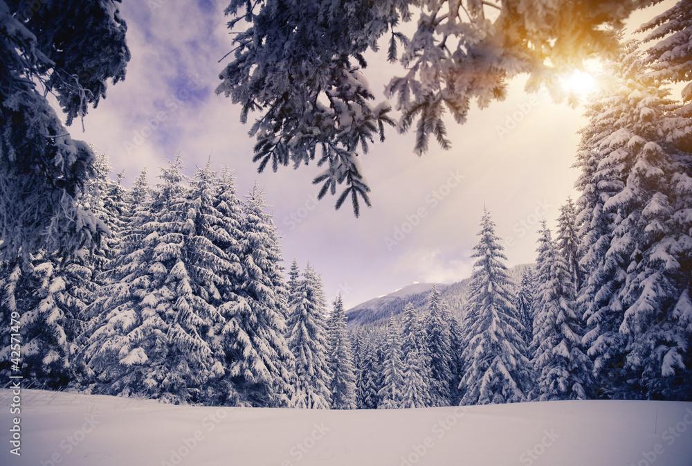 Obraz na płótnie Choinki w śniegu
