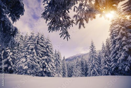 zimowy