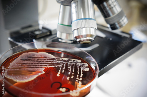 Plant Biotechnology Reports - Springer