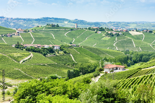 vineyars near Barbaresco, Piedmont, Italy Canvas Print
