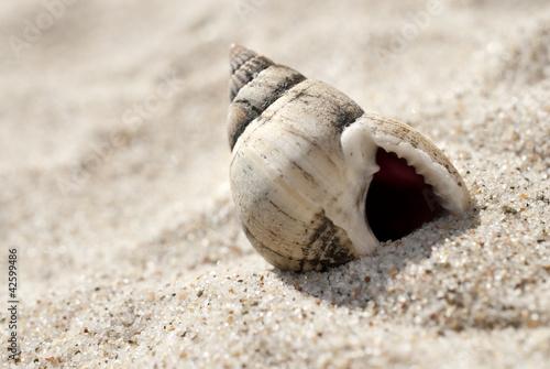 Doppelrollo mit Motiv - Schneckenhaus im Sand am Strand (von Sonja Birkelbach)