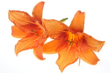 Nature Orange Lily Flowers At A Spa