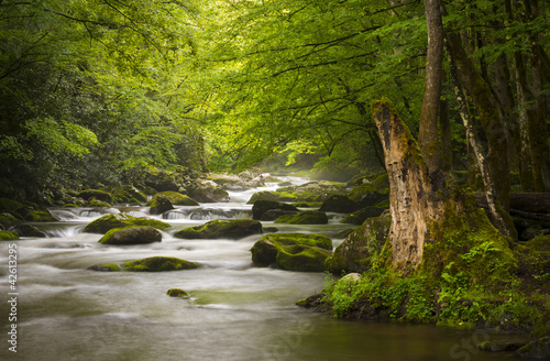 Fotobehang Rivier Great Smoky Mountains National Park Foggy Tremont River