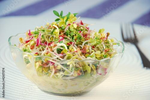 Fototapeta Zdrowa sałatka z kiełków i warzyw obraz