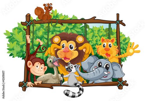 Foto op Aluminium Zoo various animals