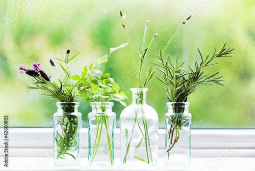 Photo  Jars of fresh herbs on window cill
