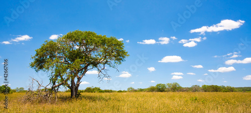Staande foto Afrika African landscape in Kruger National Park, South Africa