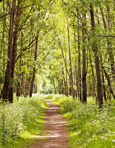 Foto op Canvas Pistache Path in a sunny summer forest