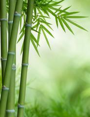 Fototapeta Drzewa bamboo tree with leaves